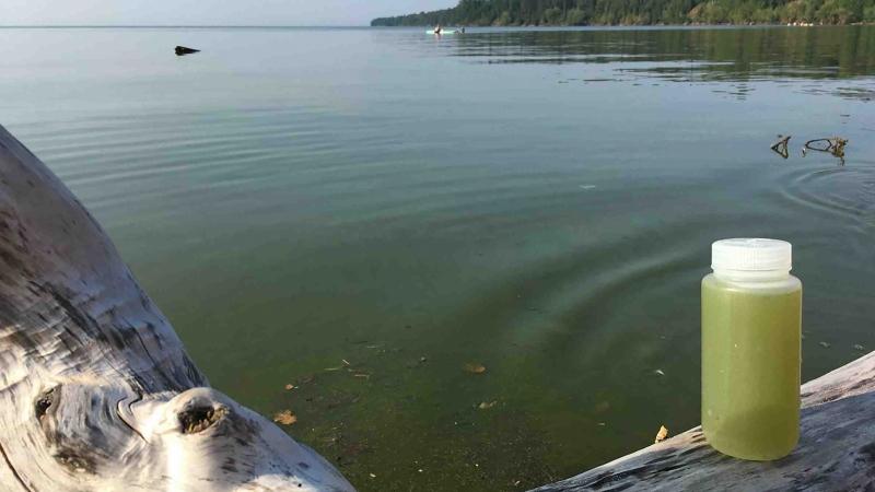 Lake Superior, algae