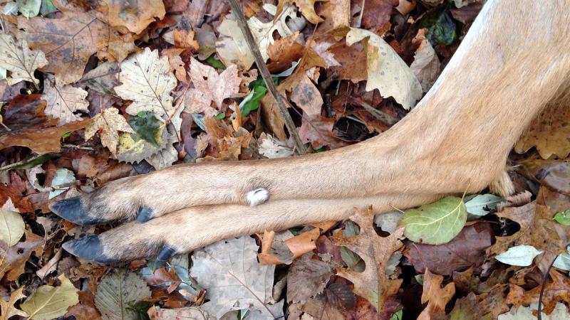 Deer legs