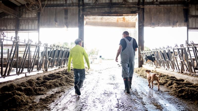 Roberto Tecpile and John Rosenow walk through the dairy barn
