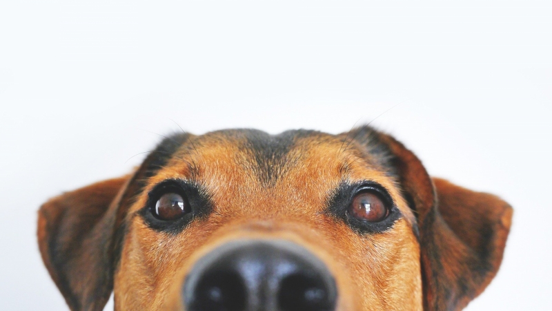 Dog peeking over bottom edge of photo.