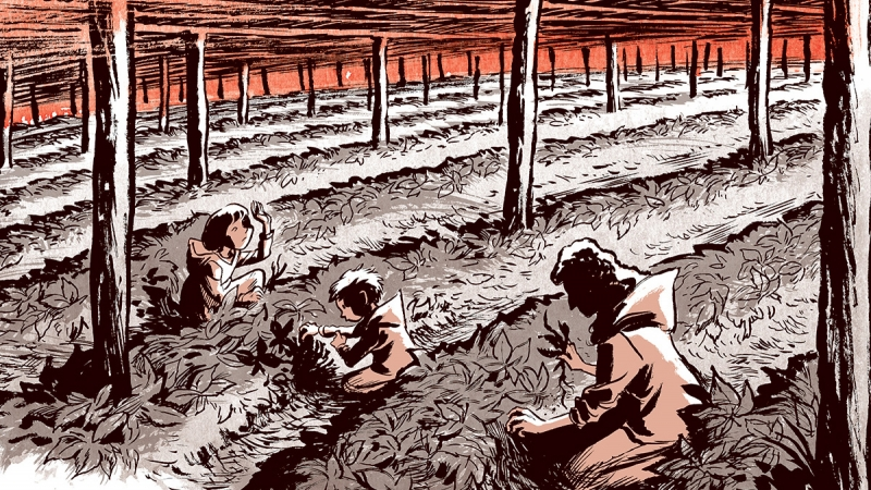 """Illustration from """"Ginseng Roots"""" comic book"""