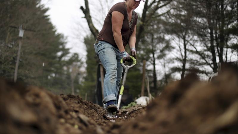 Marisa Tobey digs in the moist soil of her garden, Thursday, April 27, 2017