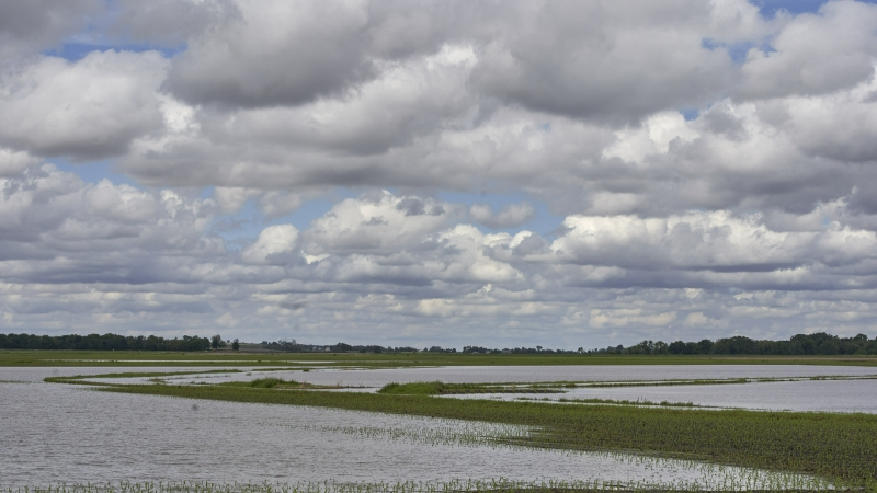 A field flooded by waters