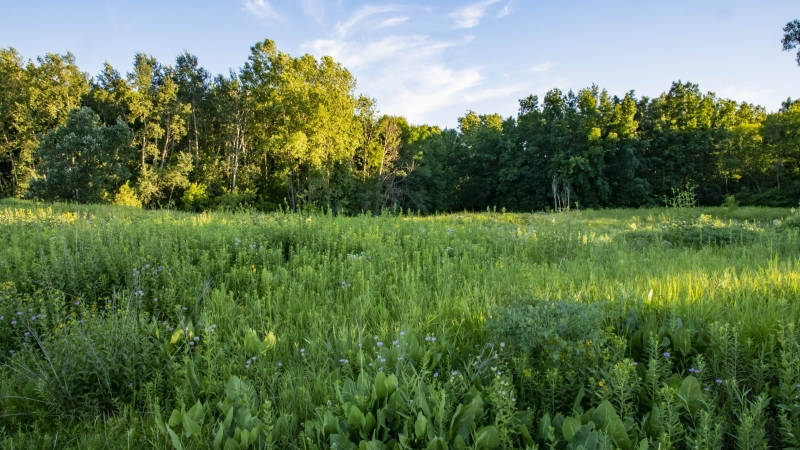 The Keith White Prairie is located on the University of Wisconsin-Green Bay campus in the Cofrin Memorial Arboretum