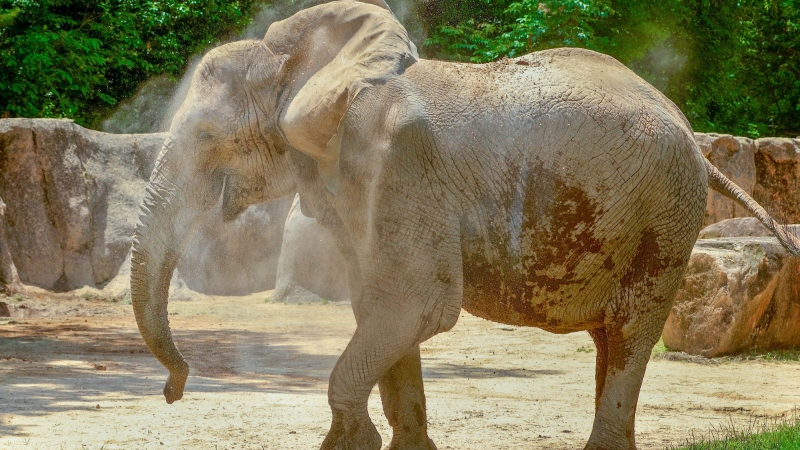 Belle the elephant