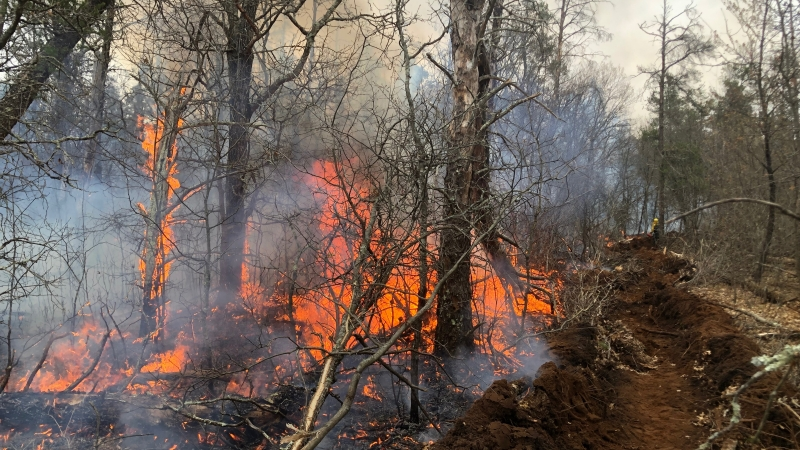 A fire in Burnett County that burned about four acres on Saturday was caused by someonethrowing hot ashes from a wood stove or fireplace into the woods