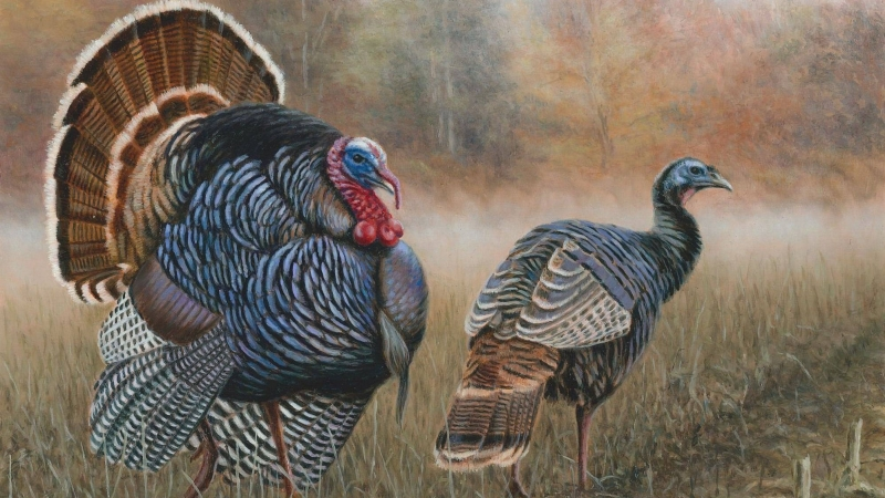 Brian Kuether is the Wisconsin Department of Natural Resources' winner of the 2020 pheasant and turkey stamp