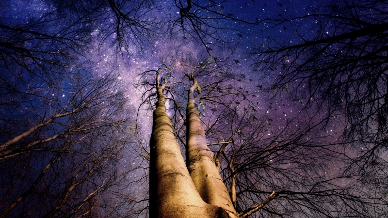 Starry night sky through trees.