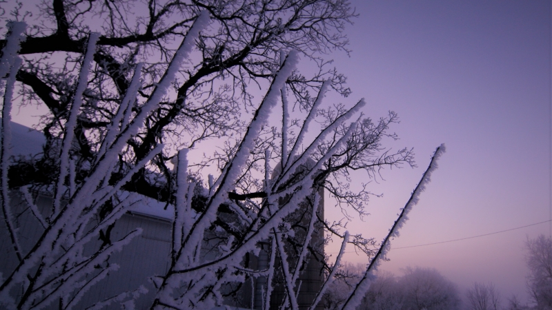 Hoar frost and barn at sunrise in rural Wisconsin