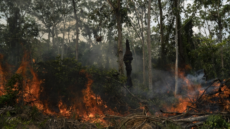 Fire in the Brazilian Amazon rain forest