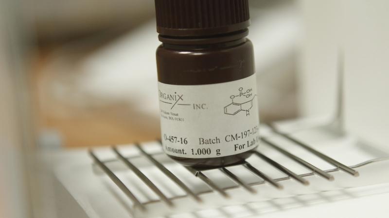 A dose of psilocybin, the active ingredient in hallucinogenic mushrooms