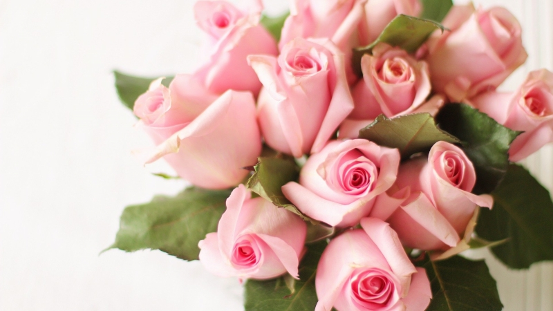 Pink rose bouquet.