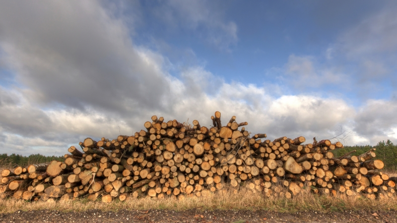 Timber stacked