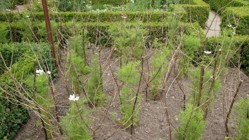 pruned materials, Jeff Epping