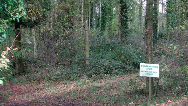 An area of a forest dedicated to land conservation
