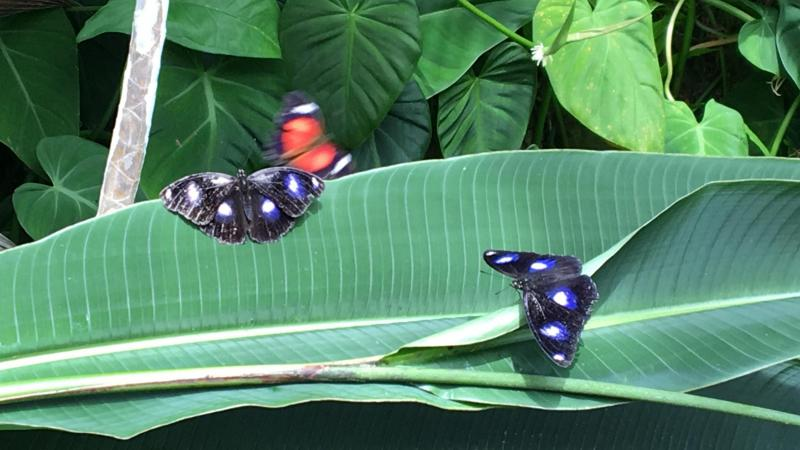 Australian Butterfly Sanctuary in Kuranda, AU - Photo by Allen Rieland