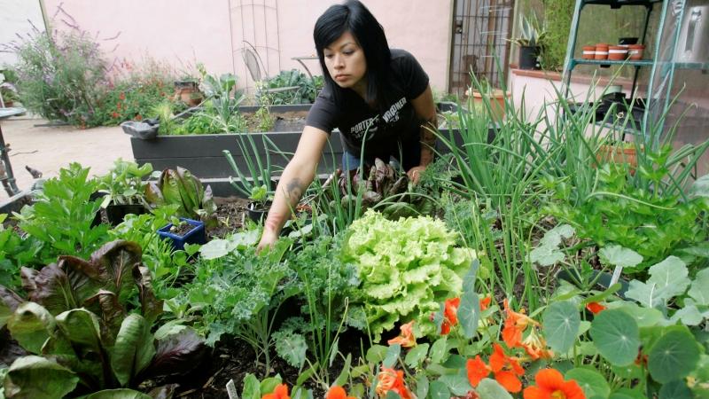Adriana Martinez works in her backyard garden