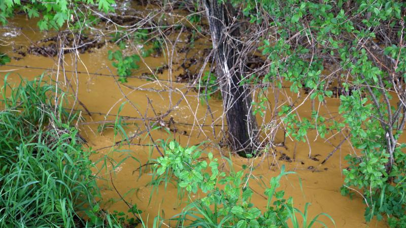 Orange creek water