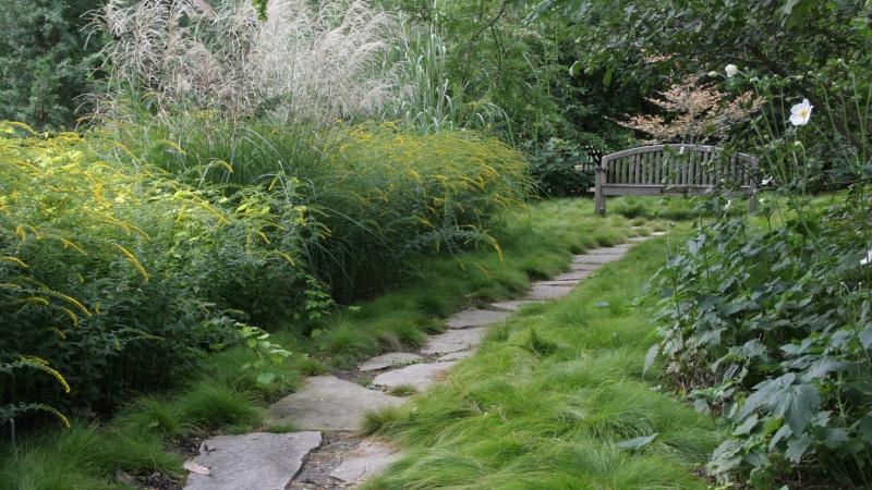 alternative lawn planting