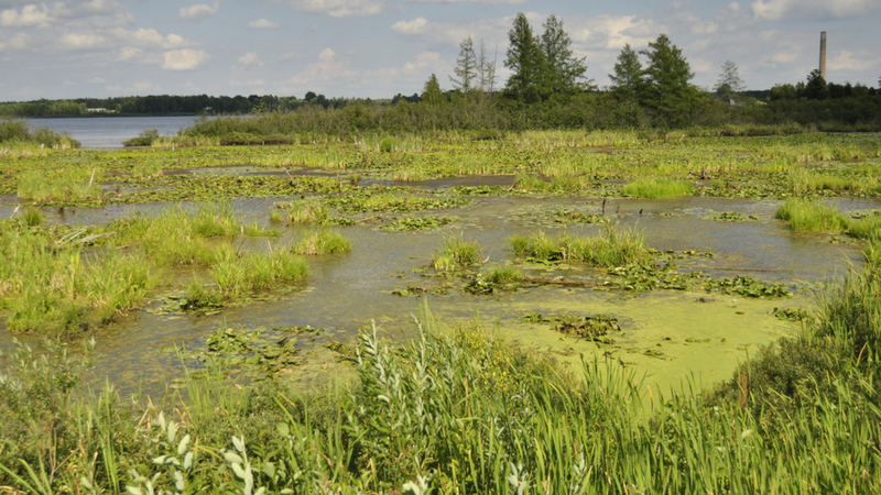 Wetlands in Laona, Wisconsin