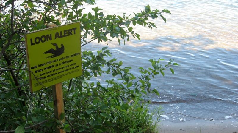 Loon sign at Kemp Natural Resources Station