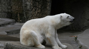 Read full article: Snow Lilly, Milwaukee County Zoo Polar Bear, Dies At 36