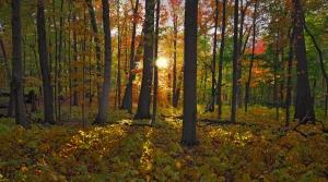 Wingra Woods, in the University of Wisconsin-Madison Arboretum