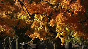 Read full article: Fall Colors Running Behind Due To Warmer Than Normal Weather