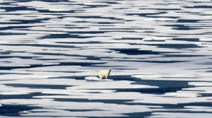 A polar bear standing on ice in the Canadian Arctic Archipelago