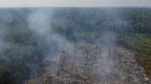 Fires destroying forest in the Amazon