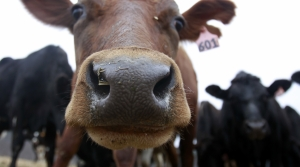 Read full article: Wisconsin Farmers Lose Milk Contracts As Canada Changes Dairy Pricing