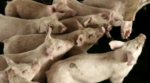 Read full article: National Group Questions CAFOs' Impact On Public Health As More Wisconsin Counties Halt Expansion