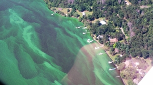 Blue-green algae blooms on Lake Petenwell