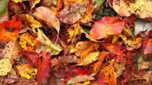Read full article: Recent Weather Conditions Could Mean Fall Colors Are Less Vibrant