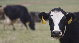 Read full article: Wisconsin Dairy Farmers Weigh Options For Risk Management