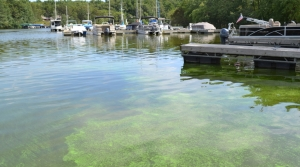 Read full article: Farmers, Environmentalists Join Forces To Battle Blue-Green Algae