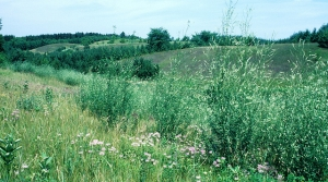 Read full article: DNR Brings In $5.9 Million From Land Sales To Date