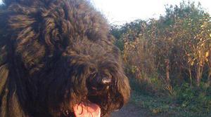 Zorba Paster's dog Izzy