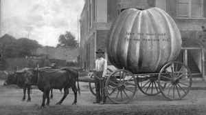Read full article: A Short History Of Pumpkins