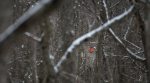 Read full article: Hunter Shot, Injured By Companions In East Wisconsin