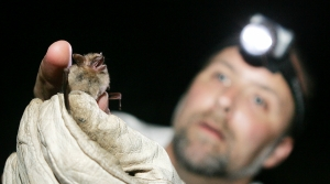 Read full article: Wisconsin Scientists Track Tiny Bat With Small Transmitter