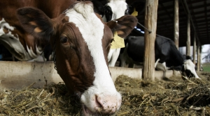 Read full article: Wisconsin Tweaks Dairy Insurance Program