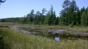Read full article: State Assembly Passes Bill To Loosen Wetlands Permitting