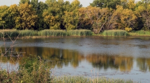 Read full article: Wisconsin Senate Committee OKs Wetland Exemptions Bill