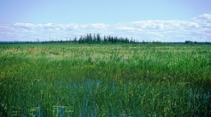 Read full article: New Guide Aims To Help Protect, Restore Wisconsin Wetlands