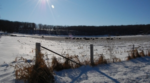 Read full article: Winter Weather Puts Wisconsin Farmers Slightly Behind Schedule For Fieldwork