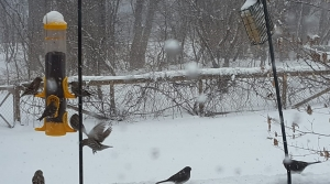 Read full article: Wildlife Center Declares 'Bird Emergency' Because Of Heavy Weekend Snow