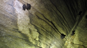 Read full article: UW-Madison Study Explores Bats As Skeeter-Eaters