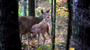 Read full article: Wisconsin Deer Farmers: Walker CWD Proposals Will Put Us Out Of Business