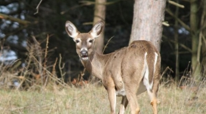 Read full article: Walker Calls For Emergency Rules To Slow Spread Of CWD